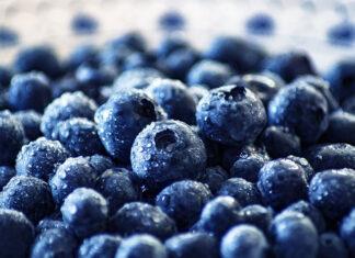 Liść i owoc borówki czernicy