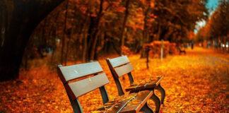 Jakie suplementy diety warto stosować jesienią